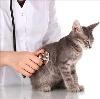 Ветеринарные клиники в Сеченово